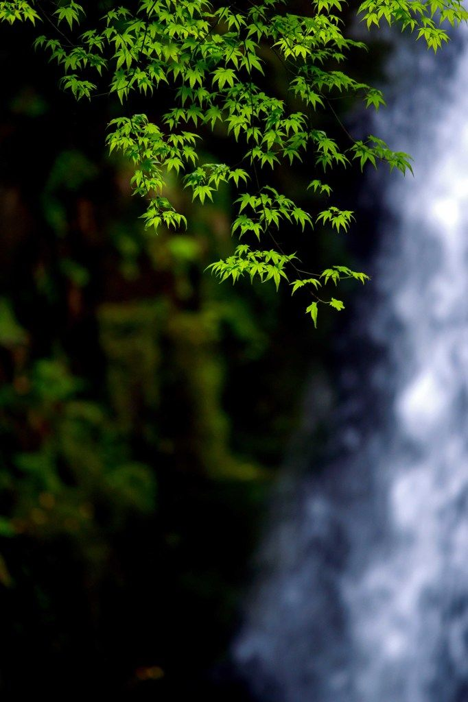 Shiraito Falls, Kumamoto, Japan 新緑の「白糸の滝」 #緑 #green