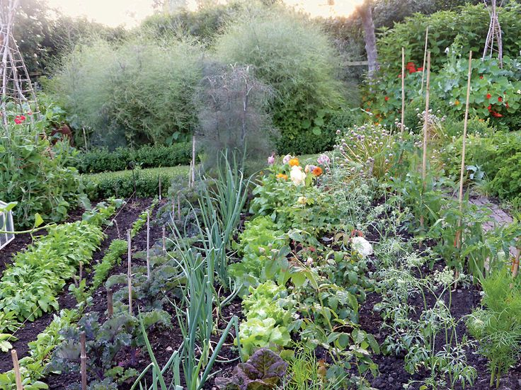A landscape of blooms in dorset gardens vegetables and for Summer vegetable garden