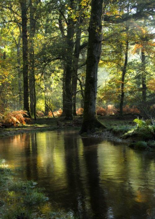 Outro bosque encantado. Fotografia: Moira Swift.