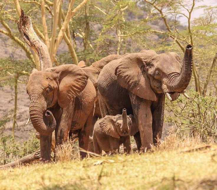 """lewa_wildlife: """"Their future is in our hands. Pic - @lewa_house…"""