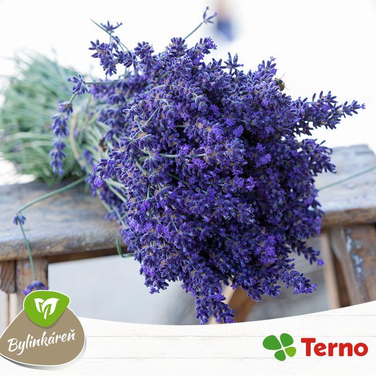 Môžeme si ju všimnúť zasadenú v predzáhradkách rodinných domov, ale aj v kvetináčoch na balkónoch. Hovoríme o Levanduli lekárskej. Táto úžasná bylinka, ktorá často skrášľuje a prevoniava naše domovy, má aj liečivé účinky. Na pomoc si ju môžete vziať pri zápaloch alebo problémoch s trávením. Využili ste už niekedy levanduľu ako liečivú bylinku? Najzaujímavejšie babské recepty odmeníme nákupnou poukážkou. :-)