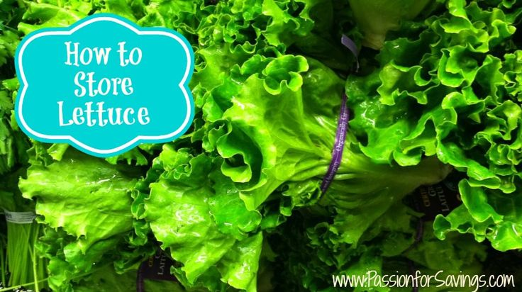 Check out these great tips on How to Store Lettuce!