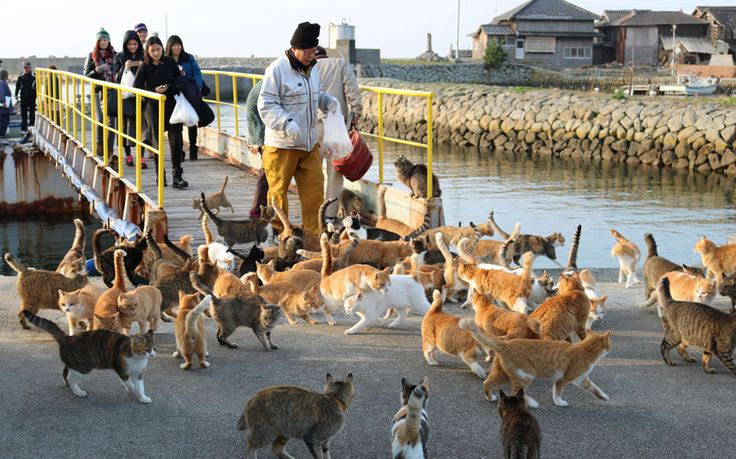 Cats gathering on Aoshima island, also known as Cat Island, in Ehime prefecture. An army of cats ruling a remote Japanese island are licking their whiskers after a plea for food aid triggered a flood of donations from across the country.