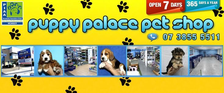 Puppy Palace Pet Shop Puppy Palace Cute Baby Puppies Puppy Jokes
