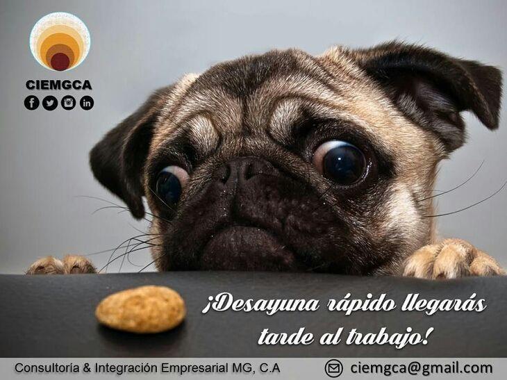 Como cuando tienes mucha hambre antes de irte a trabajar y... @ciemgca es Salud Ocupacional.  Antes de comenzar tu jornada de trabajo debes haber desayunado la mala alimentación es causante de accidentes laborales. Puedes sufrir un desvanecimiento durante algún esfuerzo físico o simplemente estar de mal humor o sin ganas de trabajar.  #tips #desayuna #evitaaccidentes #prevencion #cagua #turmero #maracay #publicidad #desayuno #viernes  #valencia #meme #perro  #maracayero #saludlaboral #dieta…
