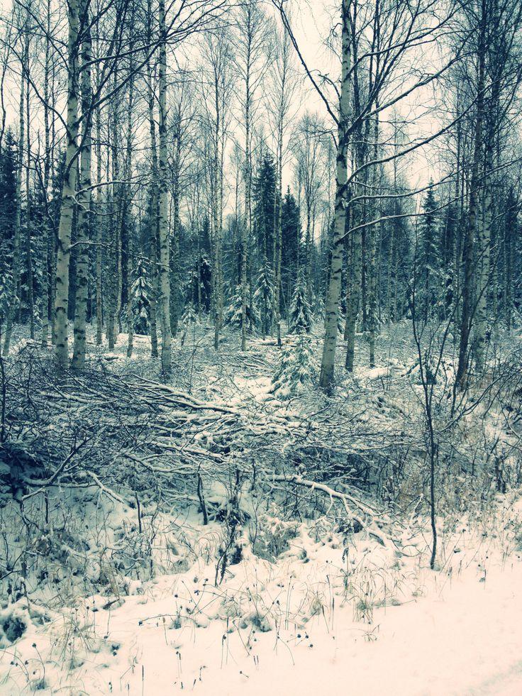 First snow, Lapland