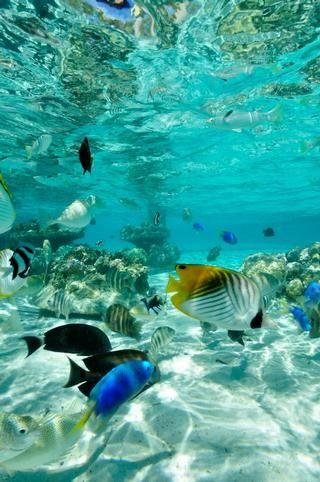 Island Escape at the InterContinental Bora Bora Le Moana Resort