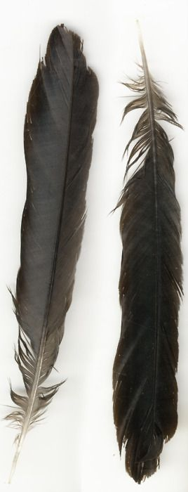 Raven feather for thigh bouquet. Or owl feather..? Raven is more quintessentially southwest to me.