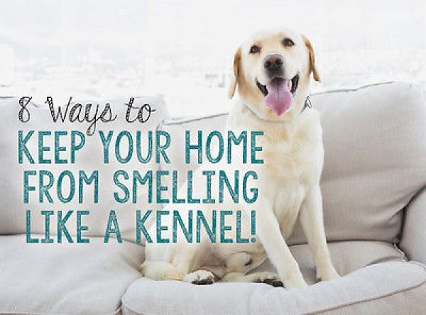 ways to keep the house smelling nice with pets