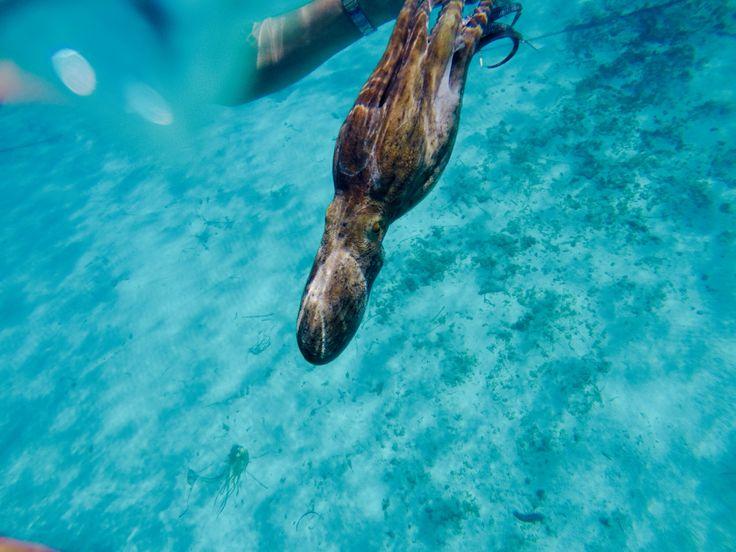 #octopus #sea #lightblue #Sardegna