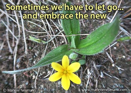 Sometimes we have to let go... and embrace the new... Inspirational quotes by Marlene Neumann. Photographer, teacher, author, philanthropist, philosopher. Marlene shares her own personal quotations from her insights, teachings and travels. Order your pack of Inspirational Cards! www.marleneneumann.com