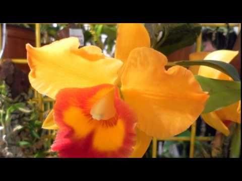 Orchideen Pflege - 10 krasse Irrtümer bei der Pflege von Orchideen