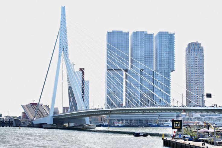 Rotterdam, Erasmus bridge. beautiful buildings. Must visit Rotterdam.