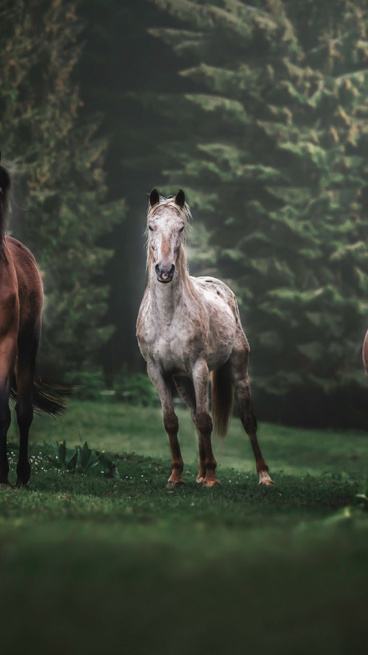 Horses Animals Herd Run Portrait 720x1280 Wallpaper Di 2020