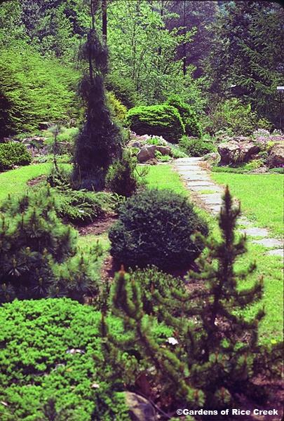 dwarf conifer year round gardens mn residential landscape restoration gardens of rice creek
