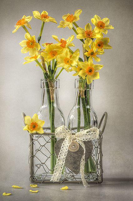 djferreira224:  Mini Daffs by Jacky Parker Floral Art on Flickr.
