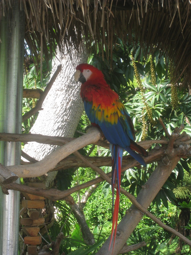 Parrott at the San Diego Zoo