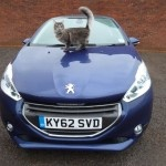 PEUGEOT INTRODUCES GARY'S CAT THIS CHRISTMAS