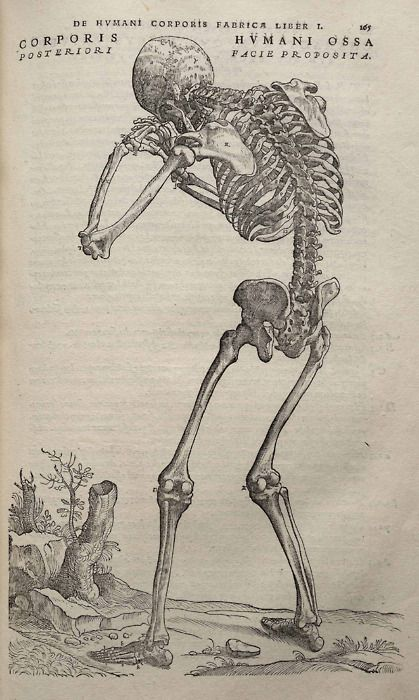 Vesalius - the world's most beautiful medical illustrations