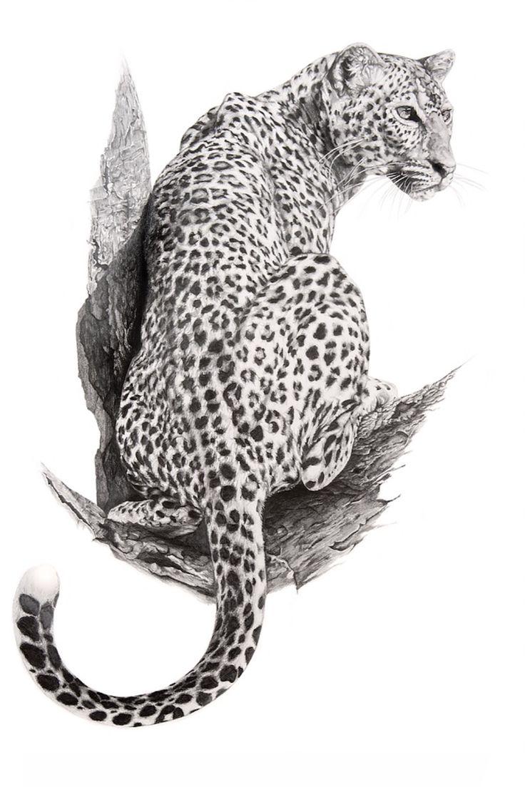 свою леопард рисунок карандашом рассказал сам яндиев