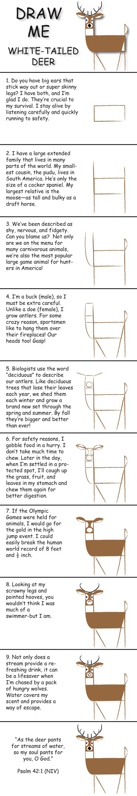 how to draw a white tailed deer head