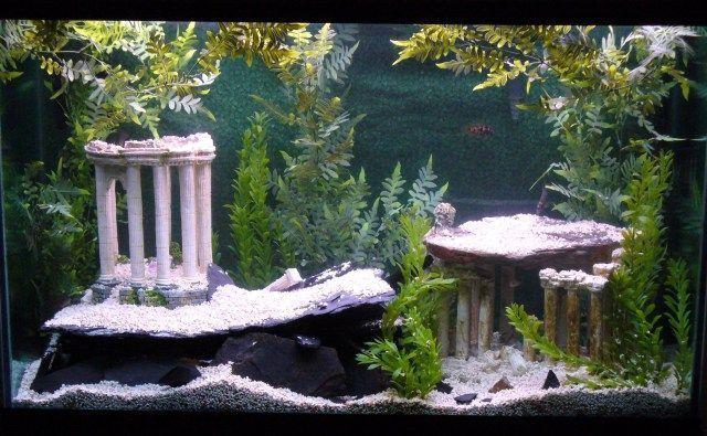Atlantis Fish Tank Themes Cichlids Com Tank Examples Aquariumtips Aquariumdecorationstheme Peces De Agua Dulce Diseno De Acuario Acuariofilia