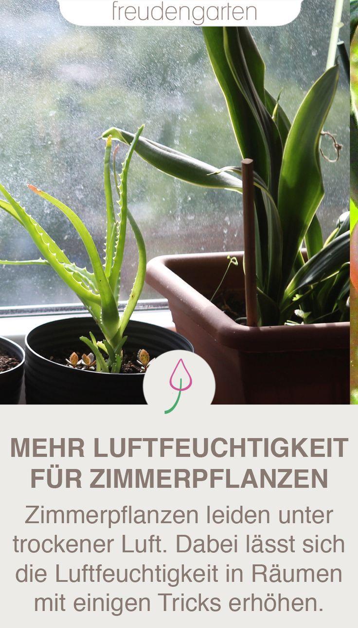 Luftfeuchtigkeit Fur Zimmerpfllanzen Erhohen Mit Bildern Pflanzen Gartentipps Winterharte Pflanzen