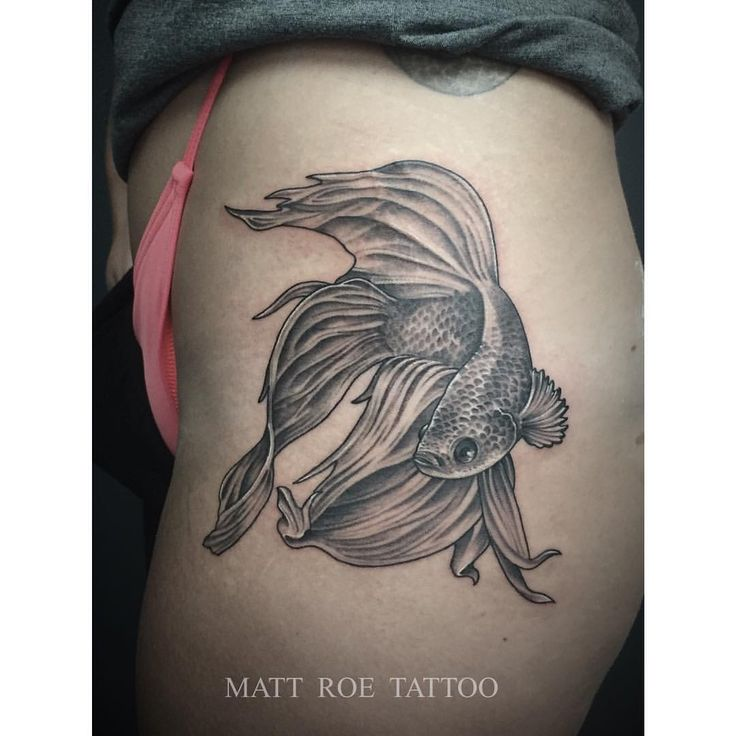chinese fighting fish drawing - Google Search