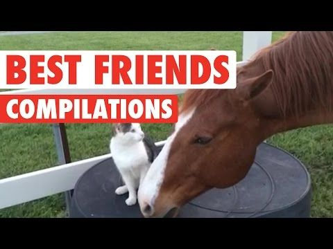 Cute BFF Pet Video Compilation 2016 - YouTube