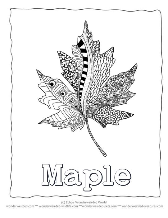 Maple Leaf Coloring Sheets Printable Collection @ wonderweirded-wildlife.com, Zentangle Coloring Pages of Leaves Pictures of Maple Leaves to Color