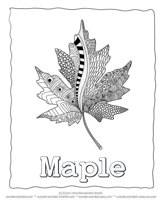 Las 25 mejores ideas sobre Maple Leaf Images en Pinterest - leaf template