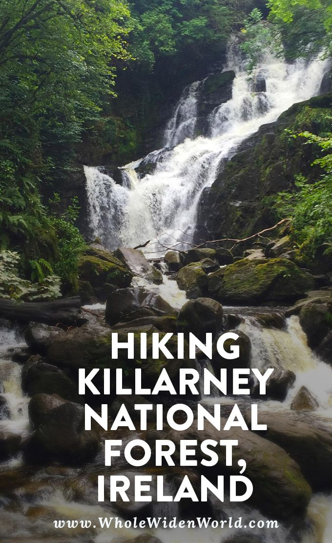 Hiking Killarney National Park: See photos from a beautiful hike from Muckross Abbey to Torc waterfall. Walk through forests and along grassy meadows. Hike or take a horse-drawn carriage ride. #killarney #ireland #hiking #killarneynationalpark #hikeguide #naturephotos #photography #travel #traveltips #travelguide #wholewidenworld