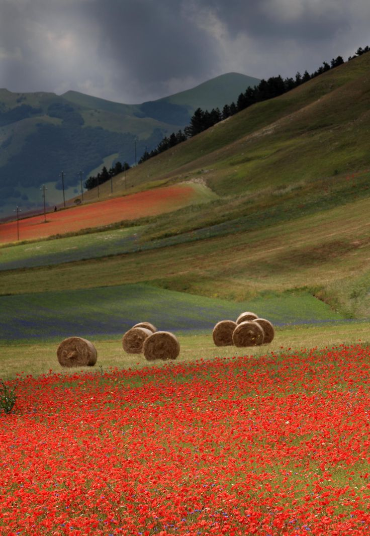 Fields around Castelluccio di Norcia in full bloom, Umbria, Italy