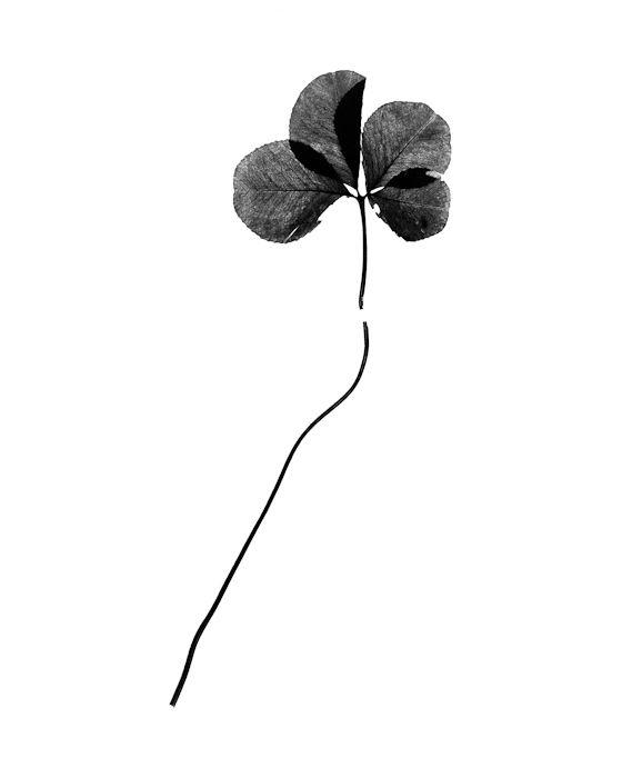 Mark Menjivar | The Luck Archive | http://www.markmenjivar.com/ | http://www.theluckarchive.org/