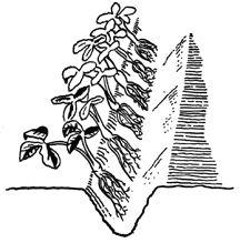 Establishing and maintaining a small fruit garden in Virginia