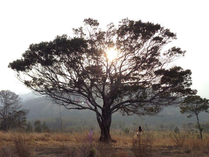 tp of Kawah Wurung  #mothernature #tree #eastjava