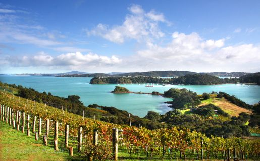 Heather Arthur is a local photographer with an eye for Waiheke's stunning landscapes.