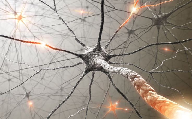 """New research has found that plaques are not the main cause of Alzheimer's disease, but rather the protein tau, also known as """"tangles."""""""