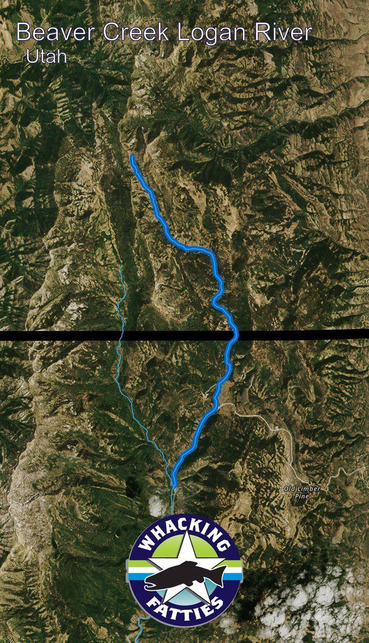 18109 best utah fishing reports images on pinterest bass for Beaver creek fly fishing