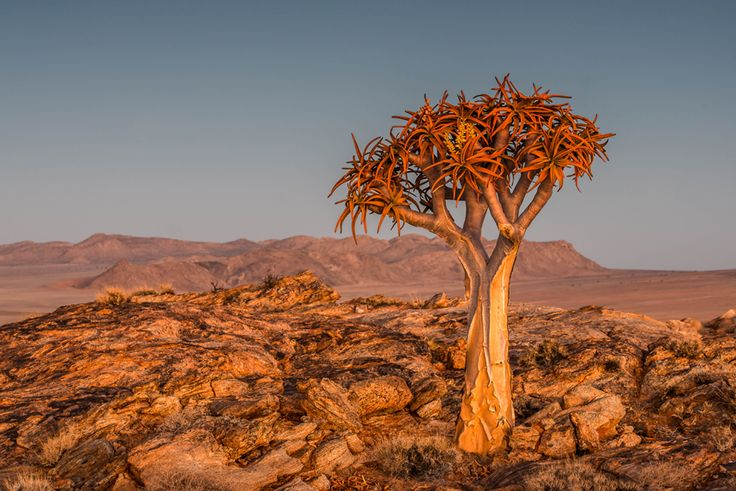 The Big Picture photography competition: round 363 Picture:Colin Griffiths, of Jersey, Channel Islands, A quiver tree under the evening light in the Kalahari Desert, Namibia.