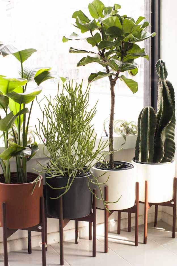 The Sill Founders Eliza Blank and Andrew Erdle Talk Their Start, Clients, Plants, and More: The Sill wants to bring keeping plants alive to everyone (plus clients like Google, Twitter, and Warby Parker). | Coveteur.com
