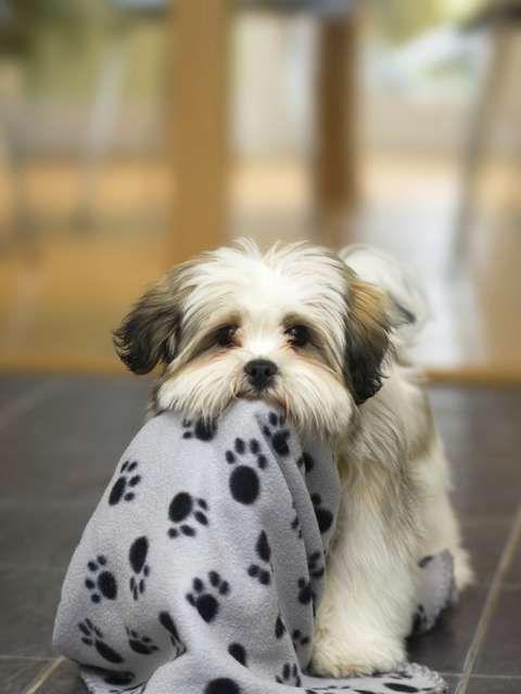 Veja dicas e raças ideais para ter cachorro em apartamento - Terra Brasil