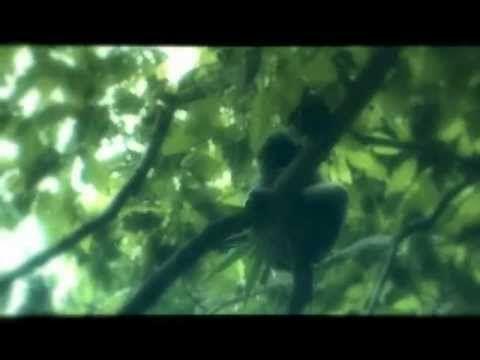 Lambusango forest triller