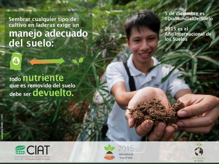 #WorldSoilDay / El cultivo en laderas exige un manejo adecuado del suelo