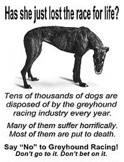 Tens of thousands of dogs are disposed of by the greyhound racing industry every year.