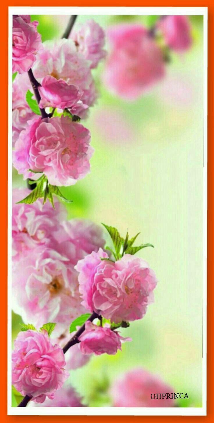 Вертикальные Обои На Телефон Цветы