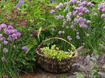 Alys Fowler S Potager Garden Garden Pinterest