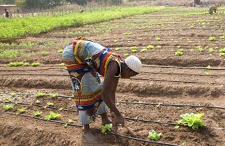 L'agriculture et ses enjeux au Gabon: Gabon Studies, Republic French