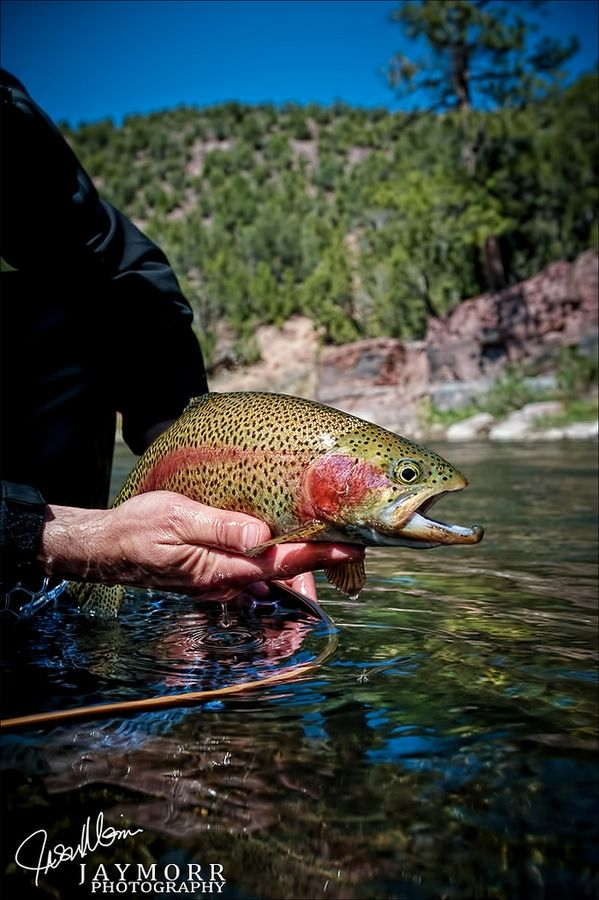 25 best images about trout on pinterest big bear lake for Best trout fishing near me