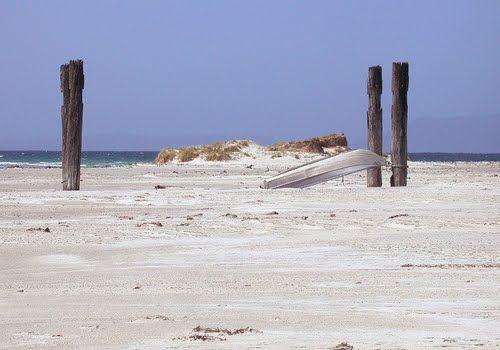Jetty Poles on Lisdillon Beach on the east coast of #Tasmania